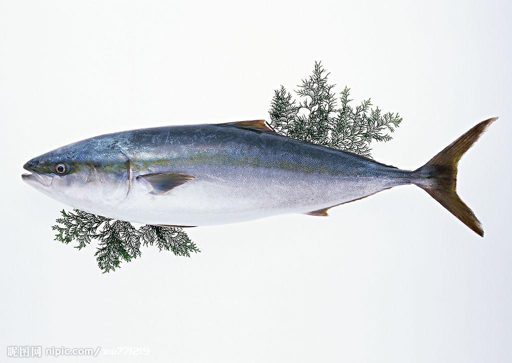 海鱼图片名字 名称