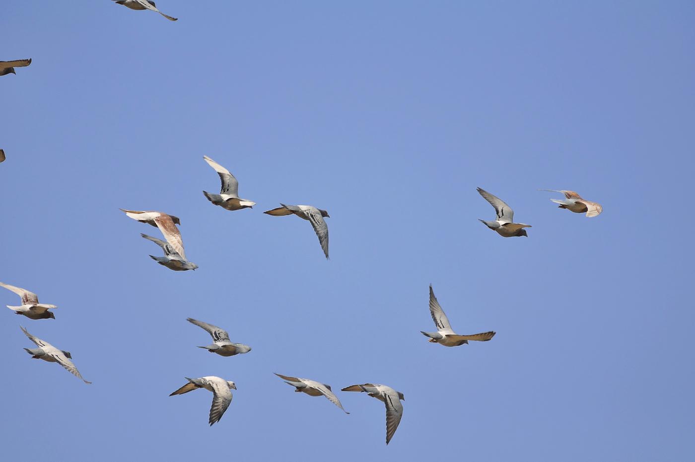 动物在天空飞翔图片